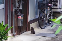 Today's Cat@2016-08-28 (masatsu) Tags: cat thebiggestgroupwithonlycats catspotting pentax mx1