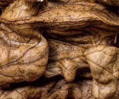 Walnut (poze_bune) Tags: macromondays food walnut cffaa