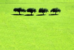 Pochi ma buoni (meghimeg) Tags: 2016 sluderno alberi trees verde green erba grass paesaggio landscape plant natura nature ombra shadow sole sun estate summer pianta allaperto openair distesaerbosa