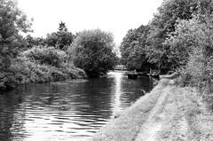 Bridgewater Canal (MCorrigan1983) Tags: jch400 streetpan 2016 bw dunhammassey jchstreepan400 nikkor50mmf14ais nikonfe2 bridgewater canal