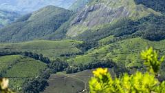 319A1628 Tea plantations of the Western Ghats, Kerala (Priscilla van Andel (Uploading database)) Tags: teaplantations westernghats kerala munnar deforestation