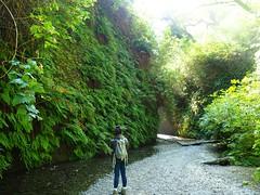 Fern Canyon (jenesizzle) Tags: ferncanyon orick orickca prairiecreek prairiecreeksp prairiecreekredwoodssp prairiecreekredwoodsstatepark ferns castateparks californiastateparks californiacoast ca california northerncalifornia landscape outdoors hiking roadtrip