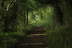 The winding path (christina.marsh25) Tags: hampshire countryside bridlepath footpath rollinghills