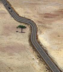 #funnypics : #road #evading a #single #tree in #desert   (Pretty Cool Pic) Tags: pretty cool funnypics road evading single tree desert
