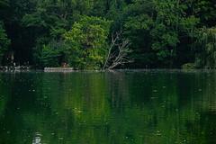 Ardres (vieubab) Tags: arbres atmosphre aube bois branchage branches calme chemin extrieur eau escapade fort feuillage feuille rivage sonyflickraward lumire luminosit lac tang nature unlimitedphotos paysage reflets saveearth sentier sony verdure vert
