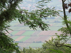 Albania - Near Fier - View over fields from Ardenica Monastery (JulesFoto) Tags: albania ardenicamonastery fier