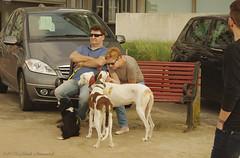 Belgian coast (Natali Antonovich) Tags: belgiancoast seasideresort seaboard seashore seaside portrait lifestyle relaxation blankenberge dog animal family heandshe