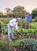 Working on the allotment (larigan.) Tags: flowers autumn man fall vegetables gardening digging shed working lifestyle hobby recreation activity allotment planting pastime healthyeating hoeing healthyliving modelreleased homeproduce larigan phamilton activeretirement gettyimageswants