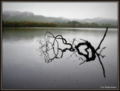 Loch of the Lowes Artwork (eric robb niven) Tags: trees mist landscape scotland dunkeld lochs canong12 ericrobbniven