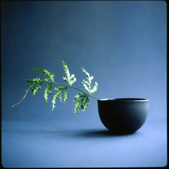 bowl and fern (sue.h) Tags: blue stilllife fern bowl hasselblad instant polaroidback fp100c artlibre mudceramics