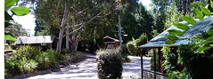 Blue Mountains accommodation: Cedar Lodge Cabins, Mount Victoria, NSW, Australia (Cedar Lodge Cabins) Tags: family vacation holiday comfortable garden cozy cabin honeymoon escape hiking getaway wildlife cottage couples peaceful tranquility bluemountains hike tourists adventure caves galleries retreat barbecue bushwalking friendly shops welcome spa abseiling luxury tranquil cosy accomodation horseriding hideaway cottages cabins hols bushland mtvictoria mountvictoria selfcatering cabbin acomodation cedarlodgecabins bluemountainsaccommodation electriclogfires