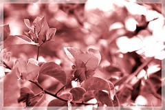 Memory . . . (Ahsan. (Busy..)) Tags: memory alone bhalobasha blur bokeh branch branches broken canon canon7d canonef24105mm closeup dof effect eka ekaki focus freedom girl happiness heart intersting leaf leaves life light loneliness lonely love me nature photography ridoy sad she tears    betray brown lie liberty purple