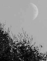 La luna pomeridiana. (Abulafia82) Tags: autumn blackandwhite bw panorama landscape blackwhite pentax bn 300mm autunno vivitar paesaggi paesaggio biancoenero 2012 lazio k5 abruzzo x2 600mm ciociaria sagradellacastagna valcomino tair3s forcadacero tair3s300mmf45 vivitarteleconverter tair300 pentaxk5 tair3s300mmf4 tair3s300 vivitarautoteleconverter22x2 ottobre2012