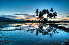 Bendang (Paddy Fields at Dawn) (Tuah Roslan) Tags: blue color tree sunrise dawn paddy coconut yan padi fiels bendang merbok
