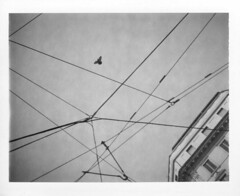 codici di geometria esistenziale (cHr1st1an S images) Tags: city trees sky bw italy white black building bird film nature thread lines mystery analog polaroid fly flying blackwhite flickr heaven geometry pigeon milano palace line 350 mysterious analogue 667 bianco nero biancoenero threads expiredfilm analogic analogico polaroid667 polaroid350 polaroidland350 expiredpolaroid polaroidexpired gometries chr1st1ans polaroidautomaticland350 polaroidautomatic350 sorrentinochristian