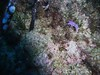 PICT0551 Flabellina pedata