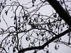 PICT0780 (ebvbaer) Tags: tiere vgel lhne