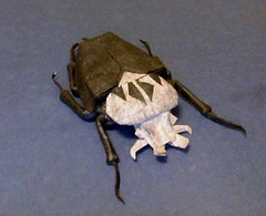 Goliath Beetle 2 (JesseBorigami) Tags: color paper origami tissue beetle stripe fold goliath unryu folding goliathus
