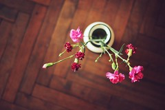 Joe's (JavierAndrs) Tags: wood pink flowers plant flores planta leaves hojas 50mm madera nikon dof floor 14 rosa depthoffield pot jar bouquet nikkor ramo gettyimages pdc piso maceta profundidaddecampo jarrn d3100