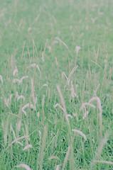 late summer weeds (Joseph Tarigan) Tags: 50mm weeds dof pentax crossprocess k5 chinon f17