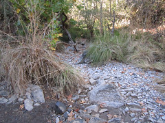 The Creek at the bottom of the Shortcut Photo