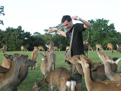 Deers (mbphillips) Tags: 日本 fareast 일본 asia アジア 아시아 亚洲 亞洲 mbphillips canonixus400 geotagged photojournalism photojournalist japan japón travel japon