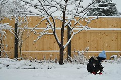 Enne, meilgi lumi! (anuwintschalek) Tags: schnee winter white snow home fence garden 50mm austria january zaun lumi weiss garten kalle niedersterreich cherrytree kodu aed talv kirschbaum wienerneustadt lapsed valge 2013 nikond90 kirsipuu lrts kirsipuuke