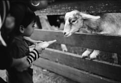 (maquaman) Tags: blackandwhite film contrast mediumformat toddler fuji iso400 6x9 ilfordxp2 90mm gw690