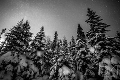 Reaching For The Stars (Dru Kennedy) Tags: dru trees winter blackandwhite snow cold west up night corner newfoundland stars coast frozen photo long exposure north best photograph shooting brook kennedy snowmobile gulch