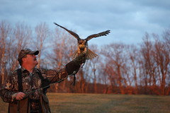 Pat LaBarbera and his redtailed hawk (Dan Small Outdoors) Tags: falconry redtailedhawk cousinpatrick dansmall patlabarbera outdoorsradio patricklabarbera wisconsinfalconersassociation