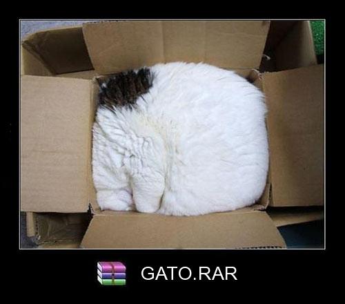 gato_rar