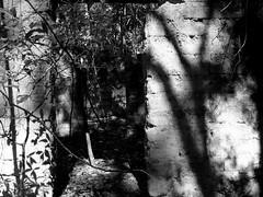 :: Retour a la Terre :: (J!bz) Tags: voyage trip travel viaje light shadow bw naturaleza white house black tree travelling abandoned blanco luz nature monochrome america forest dark mexico arbol mono photo casa noir shadows natural negro sombra natura nb ombre viajando mexican bosque lumiere latin mexique voyager latino latina traveling arvore maison foret arbre blanc viajar obscur oscuro viajero jbz abandonada travelphotography abandonnee jibz photodevoyage