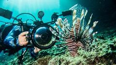 Photographer and Lionfish (Kazuma U) Tags: lionfish diver toiretbowl okinawa japan scuba diving underwater underwaterphoto olympusi inon padi