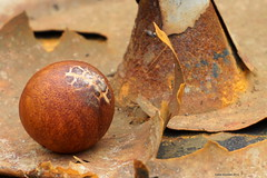 Avocado pit in rusty environment (Ineke Klaassen) Tags: stone fruit photography avocado photo rust raw artistic outdoor sony rusty pit roest imperfect vruchten roestig ilce vrucht fruitage flickrfriday avocadopit sonyalpha sonyalpha6000 sonya6000