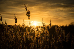 Sonnenuntergang (DommyLovesPhotography) Tags: sonnenuntergang weiher schlossseehof stimmung romantik natur memmelsdorf