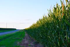 Last Legs (John Dame) Tags: nebraska corn b1b farm countryroads cornrows church harvest