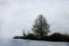 Lakeside Piiku Syte with fog (jgokoepke) Tags: pikkusyte finland lakesite winter tree ice snow