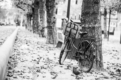 Dutch (Mbakker81) Tags: streetphotography dove blackandwhite street bike tree amsterdam bycicle monochrome