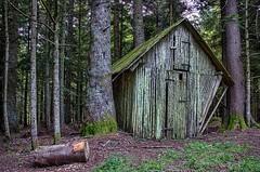 Elvish cottage (Jumpin'Jack) Tags: wooden shack cottage hay barn hayloft roe deer feeder squished jammed between two trees forest moss lichen grass spruce fir log fairytale fairytaleish eldrich otherworldly