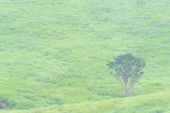 1Tonomine Highland (anglo10) Tags:    field  japan
