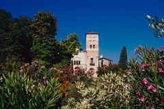 2016 San Vigilio Italy (jeho75) Tags: leica iiif leitz summicron 50mm f20 fujicolor velvia dia italien italy san vigiliio summer sommer bltenpracht oleander