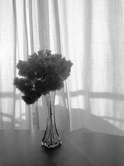 Un ramillete de buganvillas junto a la ventana (Micheo) Tags: iphone flores flowers bnbw ramo bunch vase florero cortina curtain buganvillas