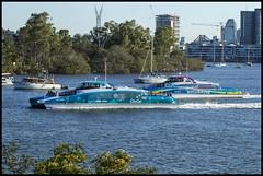 CITYCATs passing by at Hamilton-1= (Sheba_Also Millon + Views) Tags: citycats passing by hamilton