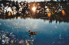 Photo21_21 (Johann Kp) Tags: 35mm film colour kodak ektar 100 explore estonia double exposure lake duck sun sunlight adventure forest nature summer silence relax mood moody canon 50e 2485