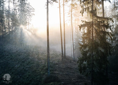 Light in the forest (PeterGrayPhoto) Tags: forest woods light morning sunrise fog mist mood texture nature landscape polska poland warmia