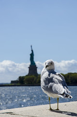 New York_ Day 3 (regis.muno) Tags: nikond7000 libertyisland ellisisland newyork newjersey jerseycity newyorkjerseycity usa