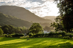 Hazy Patterdale 2 (allybeag) Tags: glenridding patterdale lakedistrict cumbria postfloods hazy evening light sheep trees fells lightandshade