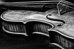 Art Perfection (Danny Lamontagne) Tags: music instrument art violin violon noiretblanc blackandwhite color wood cord musique
