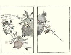 Pomegranate (Japanese Flower and Bird Art) Tags: flower pomegranate punica granatum lythraceae buncho tani nanga woodblock picture book japan japanese art readercollection
