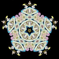 The Magical Eye (Cristina Burns) Tags: cristinaburns surrealism contemporaryart mandala foodart flowerdesign fooddesign design interiordesign photoshop stilllife fineart foodphotography